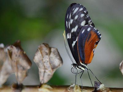 Butterfly-2000x1500